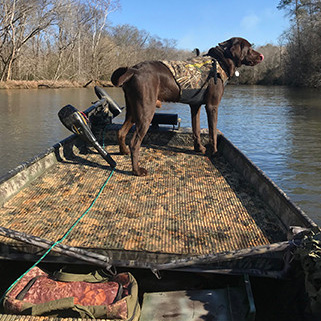 Dog in camouflaged boat